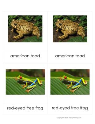 Amphibian 3 part Cards.pdf