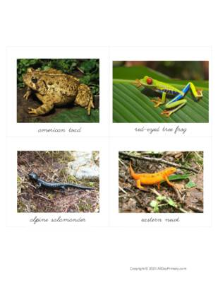 Amphibians Classified Cards.pdf