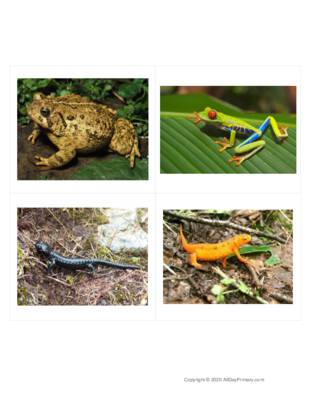 Amphibians Without Labels.pdf