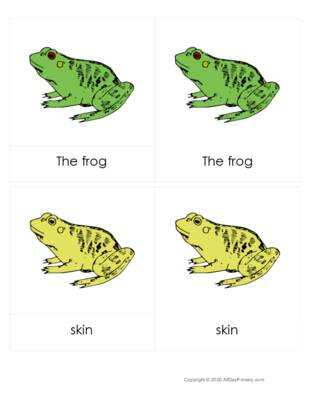 Parts of a Frog 3 part cards.pdf