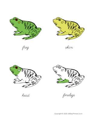 Parts of a Frog Control Chart.pdf