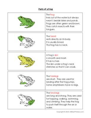 Parts of a Frog.pdf