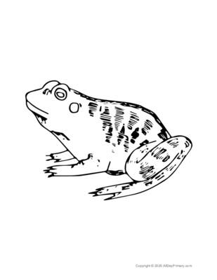 Single Frog Coloring Page.pdf