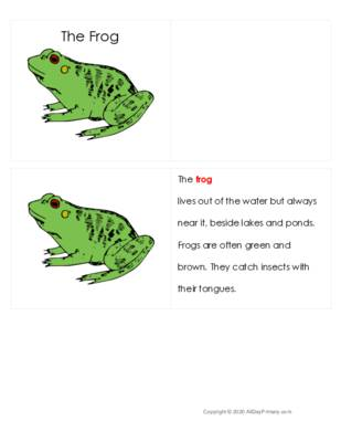 The Frog Definition Booklet.pdf