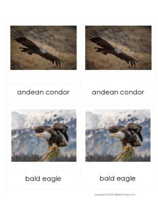 Birds Around The World 3 part Cards.pdf