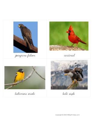 Birds From Around the World.pdf