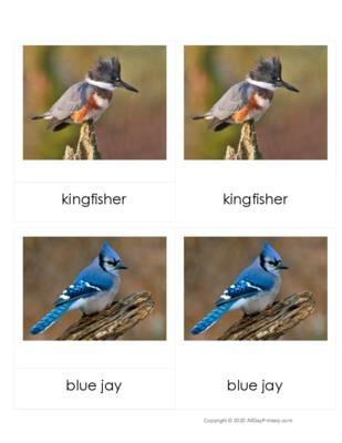 georgia birds 3 part cards.pdf