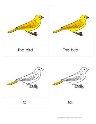 Parts of a bird 3 part cards.pdf