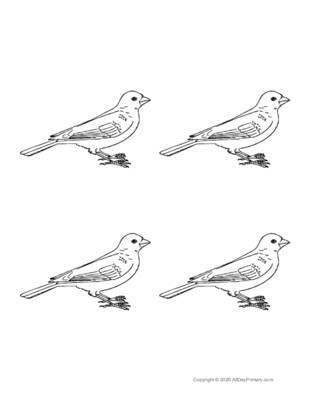 Parts of a Bird Coloring Sheet.pdf