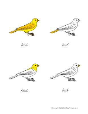 Parts of a Bird Control Chart.pdf
