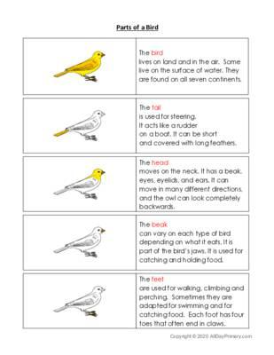 Parts of a Bird.pdf