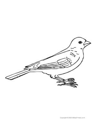 Single Bird Coloring Page.pdf