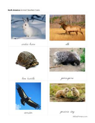 Animals From Around The World.pdf