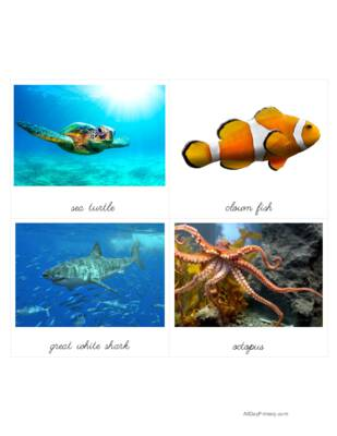 Ocean Animals Classified Cards.pdf