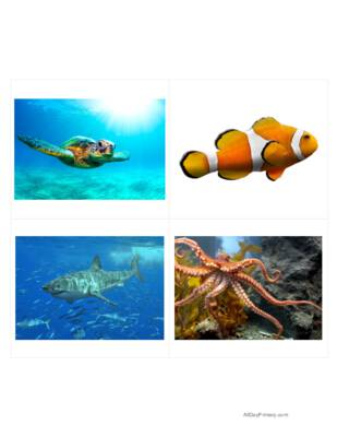 Ocean Animals Classified Cards Without Labels.pdf