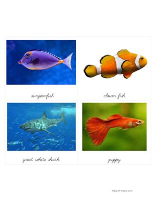 Fish Classified Cards with Labels.pdf