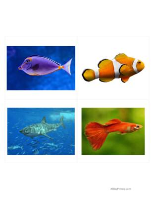 Fish Classified Cards without Labels.pdf