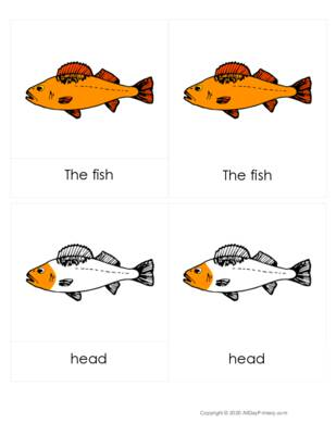 Parts of a Fish 3 part cards.pdf