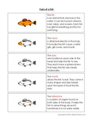 Parts of a Fish.pdf