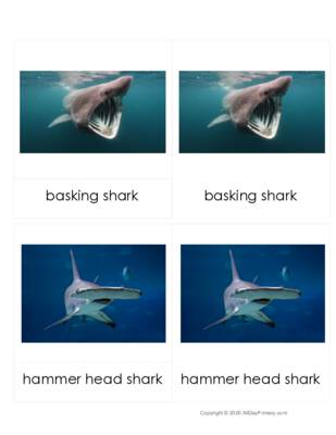 Shark Three Part Cards.pdf