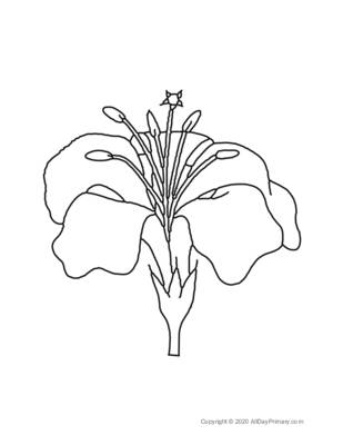 Flower Coloring Sheet 1.pdf