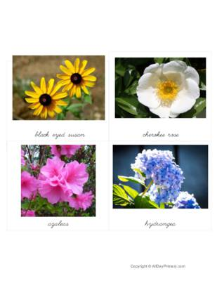 Georgia Flowers Classified Cards.pdf