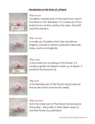 Introduction to the Parts of the Flower.pdf