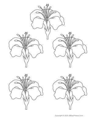 Parts of a Flower Coloring Sheet.pdf
