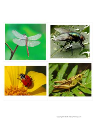 insect classified cards-edited.pdf
