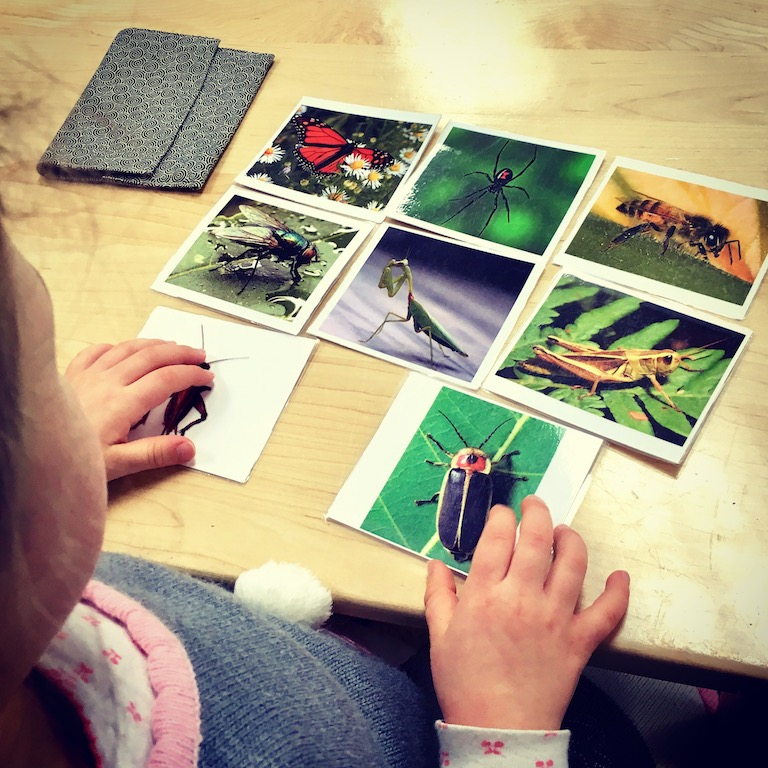 insect classified cards