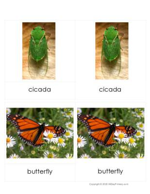 Insect Three Part Cards.pdf