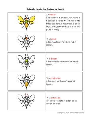 Introduction to the Parts of an Insect.pdf