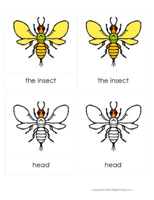 Parts of an Insect 3 part cards.pdf