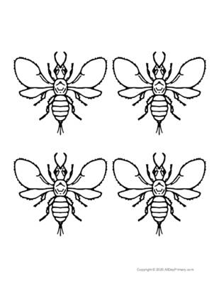 Parts of an Insect Coloring Sheet.pdf