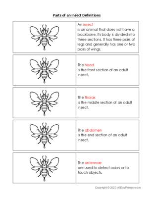 Parts of an Insect Definition Cards.pdf