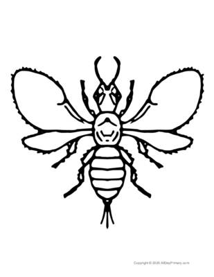 Single Insect Coloring Page.pdf
