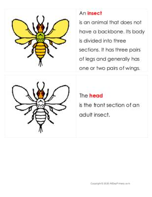 The Insect Definition Booklet.pdf