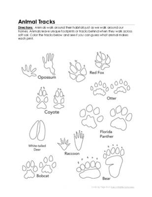 Animal Tracks Coloring Sheet.pdf