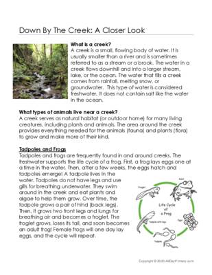 Down By The Creek- A Closer Look.pdf