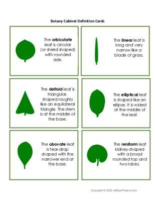 Botany Cabinet Definition Cards.pdf