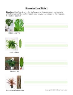 House Plant Leaf Study.pdf
