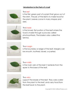 Introduction to the Parts of a Leaf.pdf