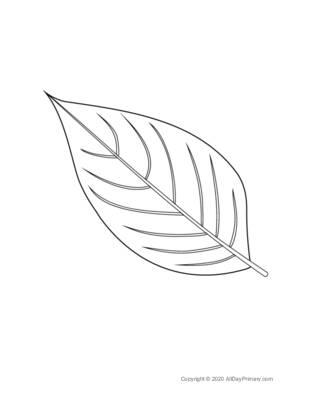 Leaf Coloring Sheet.pdf