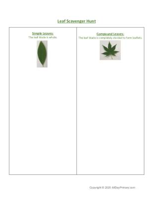 Leaf Scavenger Hunt.pdf