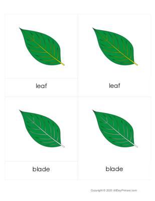 Parts of a Leaf 3 Part Cards.pdf