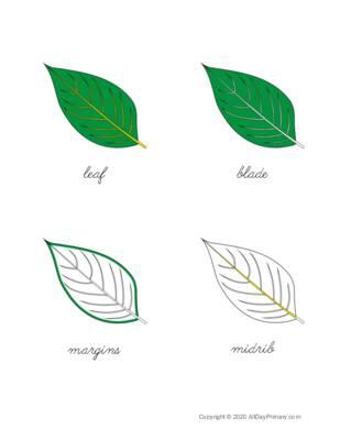 Parts of a Leaf Control Chart.pdf