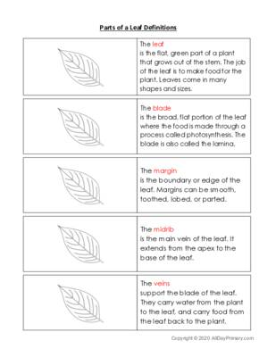 Parts of a Leaf Definitions.pdf