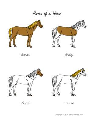 Parts of a Horse Control Chart.pdf