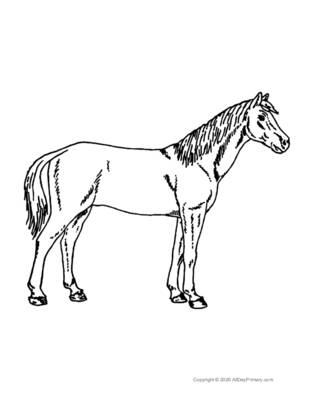 Single Horse Coloring Page.pdf