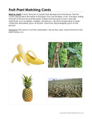 Fruit-Plant Matching Cards.pdf
